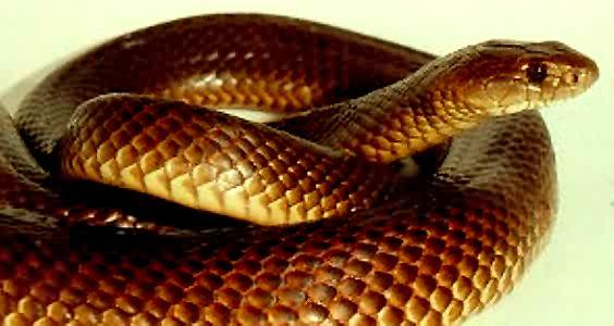 rencontre avec un serpent